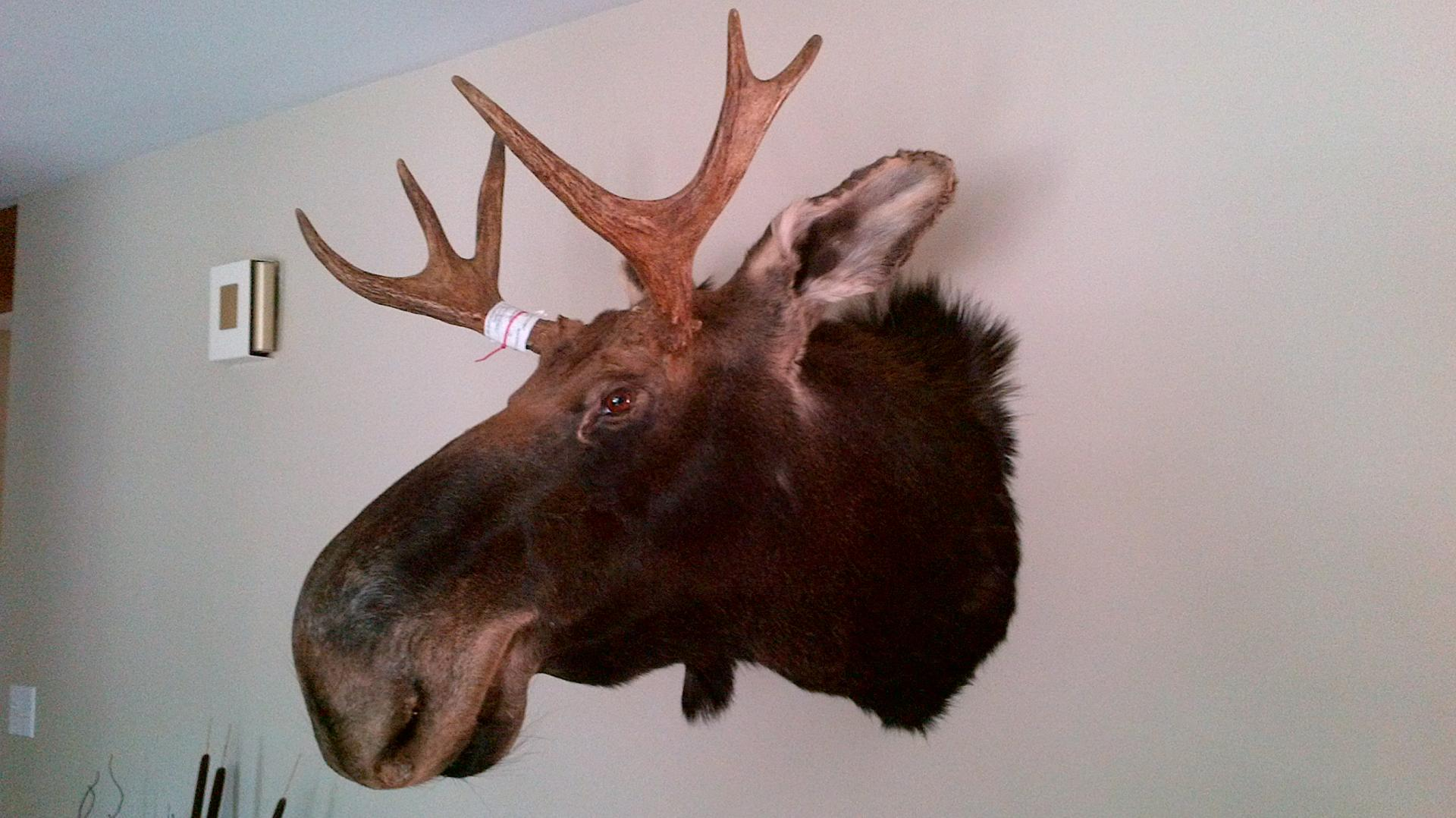 taxidermie r.d